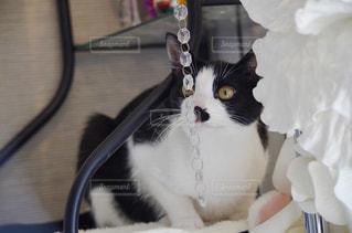 白い面の上に座って黒い猫 - No.1024457