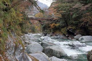 祖谷のかずら橋の写真・画像素材[895258]