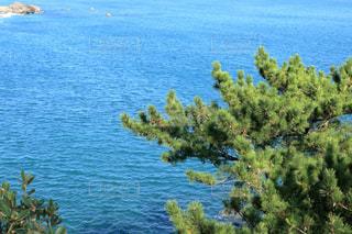 太平洋と松の木(桂浜)の写真・画像素材[895319]