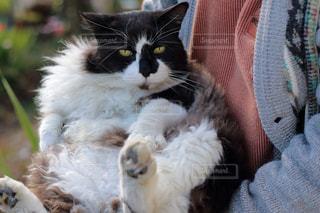 穏やかな野良猫の写真・画像素材[898642]