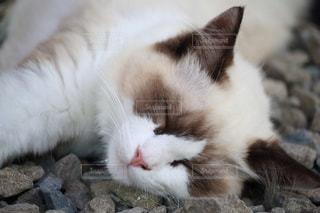 猫さん おやすみなさいの写真・画像素材[898645]