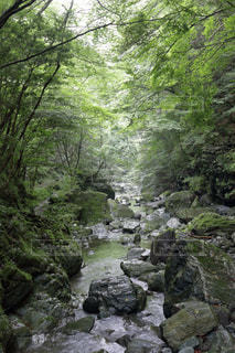安居渓谷 飛竜の滝帰り道の写真・画像素材[899543]