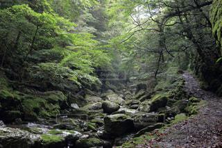 安居渓谷 飛竜の滝への道の写真・画像素材[899546]