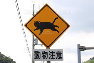 動物注意 猫ですの写真・画像素材[899653]