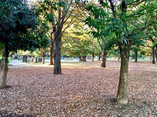 公園の木の写真・画像素材[888875]