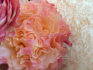 近くの花のアップの写真・画像素材[893926]