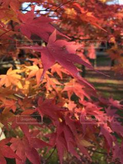 近くの木のアップ - No.894135