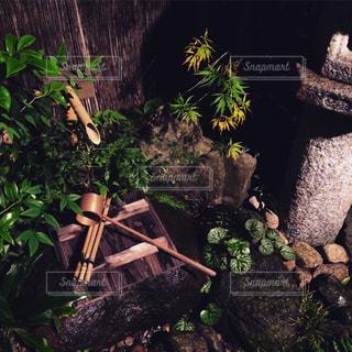 和風庭園の写真・画像素材[893935]
