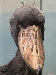 動かぬ鳥の 何を思うや 人の業にの写真・画像素材[894320]