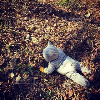 草の上で寝転がる赤ちゃんの写真・画像素材[917724]
