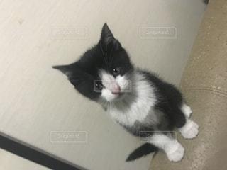 白い面の上に座って猫の写真・画像素材[894488]