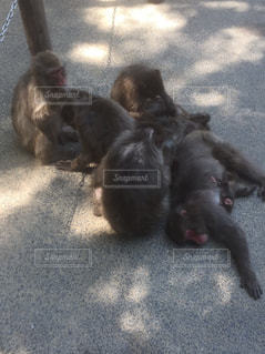 小さな猿団子の写真・画像素材[894897]