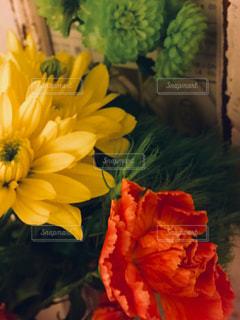 花のアップ - No.1009160