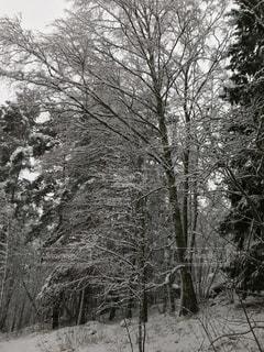 雪に覆われた木 - No.915312