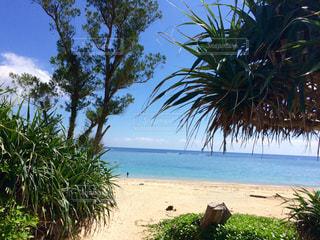 ヤシの木とビーチの写真・画像素材[898454]