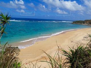 ヤシの木と水の体を持つビーチの写真・画像素材[898456]