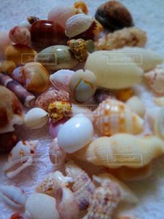 想い出の貝殻の写真・画像素材[898458]