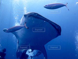 水の中の魚の群れの写真・画像素材[899563]