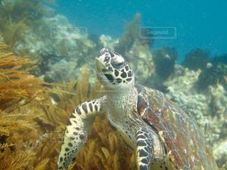水中を泳ぐカメの写真・画像素材[900031]