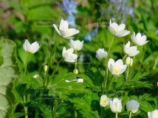 近くの花のアップの写真・画像素材[901248]