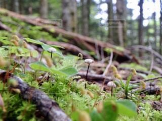 フォレスト内のツリーの写真・画像素材[901441]