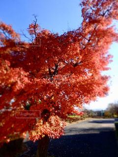 近くの木のアップの写真・画像素材[910956]