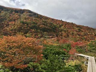 背景の山と木の写真・画像素材[1536079]
