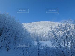 静かな霧氷の景色の写真・画像素材[1790633]