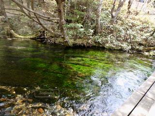 綺麗な水に綺麗な藻の緑の写真・画像素材[2832109]