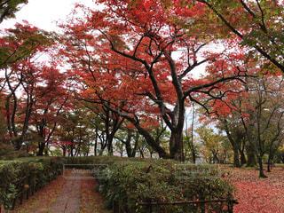 紅葉を観ながらの入り口の写真・画像素材[895552]
