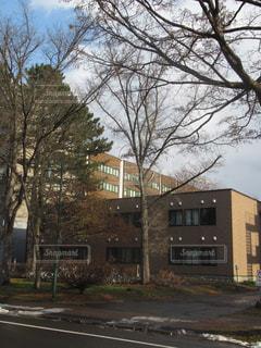 北大文系学部の建物と樹木の写真・画像素材[896566]