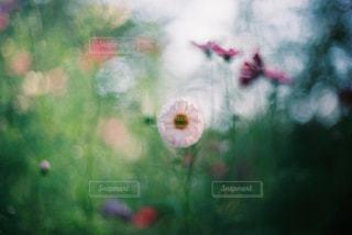 花のぼやけた画像の写真・画像素材[997345]