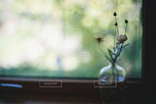 ガラスの小瓶の写真・画像素材[997347]