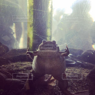 カエルはウィンドウの前に立っての写真・画像素材[897819]