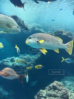 お魚の群れの写真・画像素材[896152]