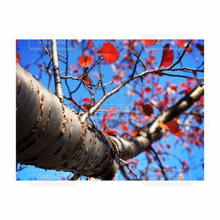 秋色模様の写真・画像素材[896294]