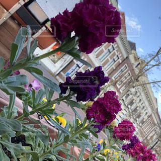 花の写真・画像素材[914628]