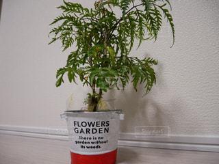 木の花の花瓶の写真・画像素材[952562]