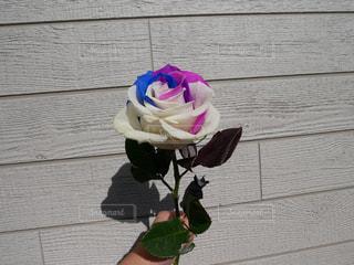 紫色の花一杯の花瓶の写真・画像素材[965842]