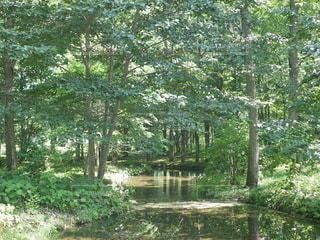 森の中の写真・画像素材[3615903]