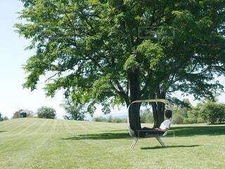 草原に立っているキリンの写真・画像素材[3615904]