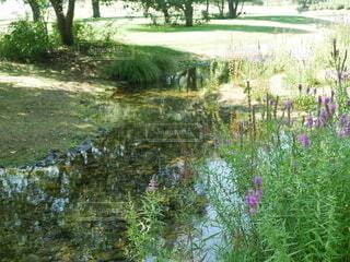 池のクローズアップの写真・画像素材[3615902]