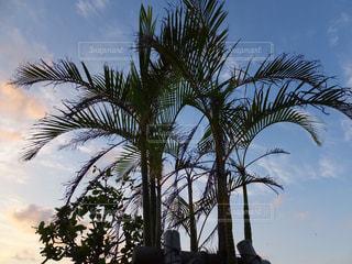 沖縄の空・ヤシの木の写真・画像素材[897436]