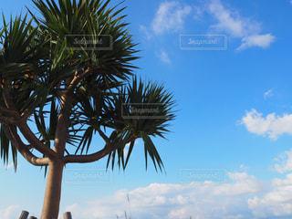 沖縄の空と樹木 - No.897596