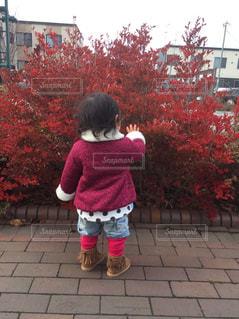 秋の写真・画像素材[897716]