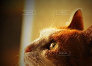 猫のアップの写真・画像素材[897457]