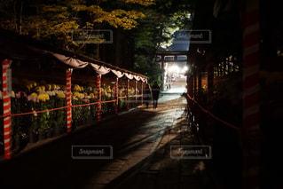 秋への道の写真・画像素材[898352]
