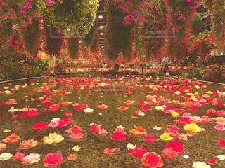 池の花の写真・画像素材[900804]