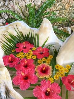 近くの花のアップの写真・画像素材[898779]