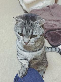 反省猫の写真・画像素材[900947]